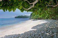 Tropisch Stock Fotografie
