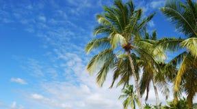 Tropisch stockbild