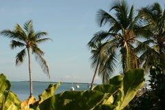 Tropisch Lizenzfreies Stockfoto