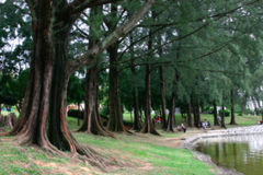 Tropisch Stock Foto's