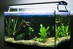 Tropisch aquarium Stock Foto's