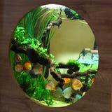 Tropisch aquarium met kleurrijke vissen Stock Foto