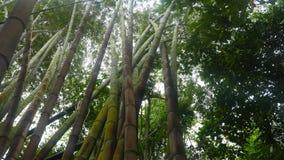 Tropisch bamboebos stock footage