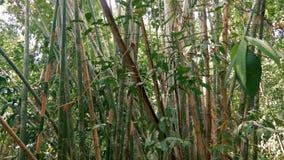 Tropisch bamboebos