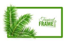 Tropisch bannerkader Ontwerplay-out Groene palmbladen Vector illustratie royalty-vrije illustratie