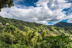 Tropisch berglandschap met palmen en groene vegetatie Stock Foto