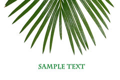 Tropisch blad Royalty-vrije Stock Foto's