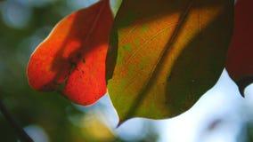 Tropisch blad, super close-up op vage achtergrond van gebladerte en hemel Zonglans, bokeh stock videobeelden
