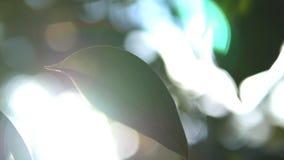 Tropisch blad, super close-up op vage achtergrond van gebladerte en hemel Zonglans, bokeh stock video