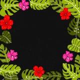 Tropisch bladerenkader met copyspace De heldere hand getrokken blad en hibiscus donkere achtergrond van bloemenar Royalty-vrije Stock Afbeeldingen