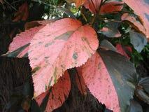 Tropisch bloemenbladeren naadloos patroon Royalty-vrije Stock Fotografie