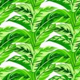 Tropisch bloemenpatroon Royalty-vrije Stock Foto's