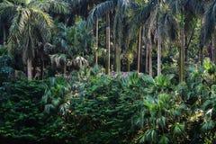 Tropisch bos royalty-vrije stock fotografie