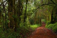 Tropisch bos Royalty-vrije Stock Afbeeldingen