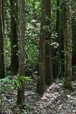 Tropisch Bos Royalty-vrije Stock Foto