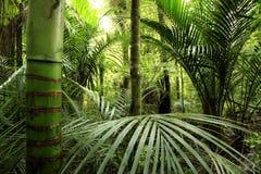 Tropisch bos Royalty-vrije Stock Foto's