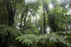 Tropisch Bos Stock Foto