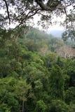 Tropisch Bos Stock Afbeelding