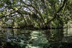 Tropisch Bos en Ondiep Water in Solomon Islands Royalty-vrije Stock Foto's