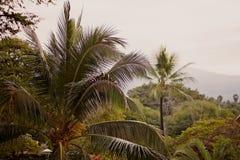 Tropisch bos in Hawaï Royalty-vrije Stock Foto's