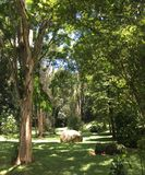 Tropisch bos met inheemse bomen stock foto's