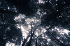 Tropisch bos met mist bij Rinjani-vulkaanberg, Lombok, I Stock Foto's