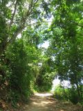 Tropisch bos Minca, Santa Marta, Colombia; Tropisch bos bij Mi royalty-vrije stock foto