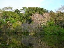 Tropisch bos op de rivier van Amazonië Stock Foto's