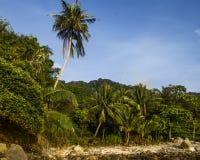 Tropisch bos op het eiland Royalty-vrije Stock Afbeeldingen