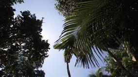 Tropisch bos, palmen in zonlicht stock videobeelden