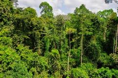 Tropisch Bos van het Nationale Park van Kakum, Ghana Royalty-vrije Stock Afbeeldingen
