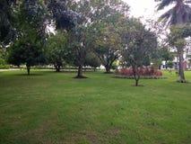 Tropisch Brazilië in ParaÃba Royalty-vrije Stock Fotografie