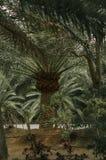 Tropisch concept aard 3d landschap Royalty-vrije Stock Afbeeldingen