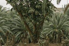 Tropisch concept aard 3d landschap Stock Foto's