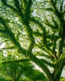 Tropisch dicht groen regenwoud in Noord-Australië Stock Afbeelding