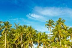 Tropisch eiland, palmen op hemelachtergrond Stock Afbeeldingen