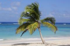 Tropisch eilandstrand Royalty-vrije Stock Afbeeldingen