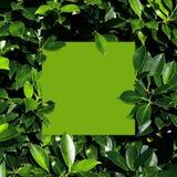 Tropisch en bladeren met de nota van de Groenboekkaart Stock Foto