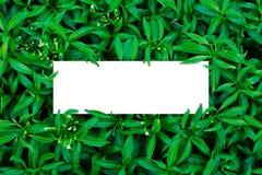 Tropisch en bladeren met de nota van de Groenboekkaart Stock Foto's