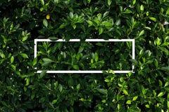 Tropisch en bladeren met de nota van de Groenboekkaart Stock Fotografie