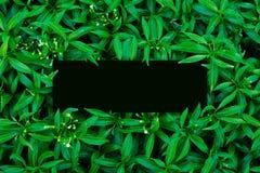 Tropisch en bladeren met de nota van de Groenboekkaart Stock Afbeeldingen