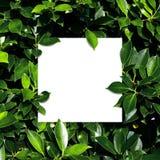 Tropisch en bladeren met document kaartnota Stock Fotografie