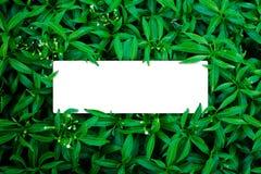 Tropisch en bladeren met document kaartnota Royalty-vrije Stock Foto