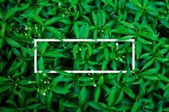 Tropisch en bladeren met document kaartnota Royalty-vrije Stock Afbeeldingen