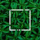 Tropisch en bladeren met document kaartnota Stock Afbeeldingen