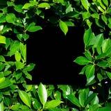 Tropisch en bladeren met Lege document kaartnota Stock Afbeelding