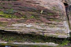 Tropisch Forest Trees Texture Royalty-vrije Stock Afbeelding