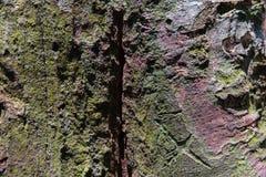 Tropisch Forest Trees Texture Royalty-vrije Stock Afbeeldingen