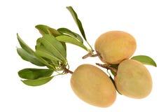 Tropisch Fruit, Chiku Stock Afbeelding