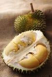 Tropisch fruit Durian Stock Afbeelding
